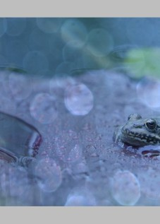 video grenouille macro carole reboul